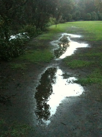 Puddle Series (2/6)