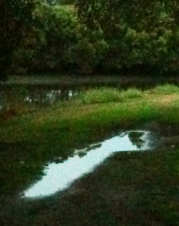 Puddle Series (4/6)